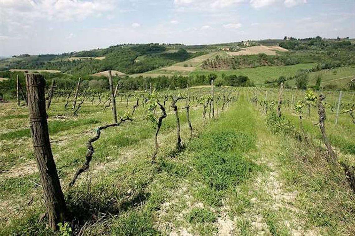 Weingut in Chianti zu verkaufen 03