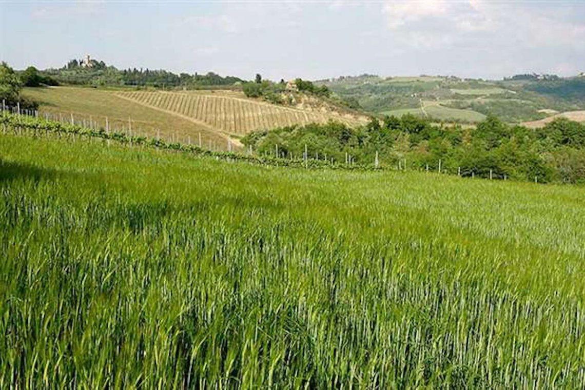Weingut in Chianti zu verkaufen 04